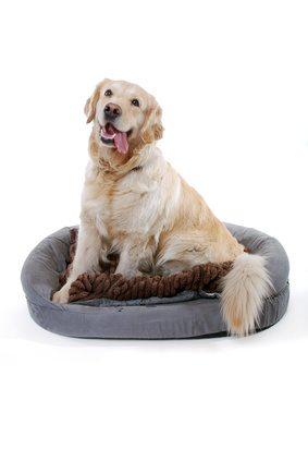 Hundesofa Ratgeber