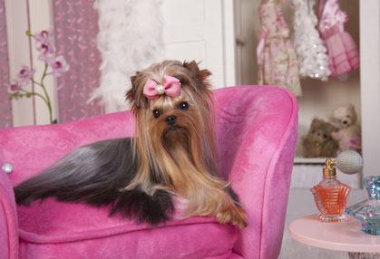 Kuscheliges Hundesofa